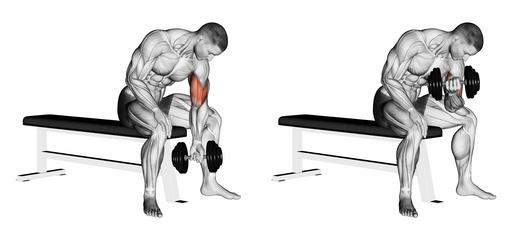 Langhantelcurls: Foto von der Anfangs- und Endstellung von der Fitness-Übung Bizepscurls mit Kurzhantel im sitzen.