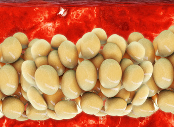 Bauchfett abbauen: Foto von Fettzellen in 3D Ansicht.