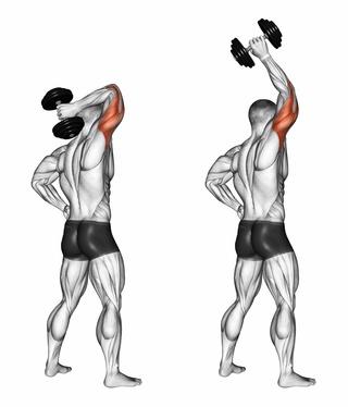 Ganzkörper Trainingsplan: Foto von einem Mann bei der Trizeps-Übung Trizepsdrücken mit Kurzhantel einarmig.