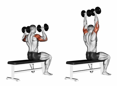 Hanteltraining zu Hause: Foto von der Schulter-Übung Schulterdrücken mit Kurzhanteln.