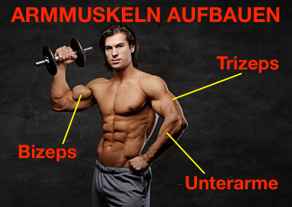 Armmuskeln aufbauen: Foto von einem Mann mit Muskeln und Markierung für Bizeps, Trizeps und Unterarme.