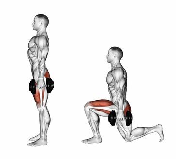 Beinstrecker Muskeln: Foto von der Übung Ausfallschritt mit Kurzhanteln.