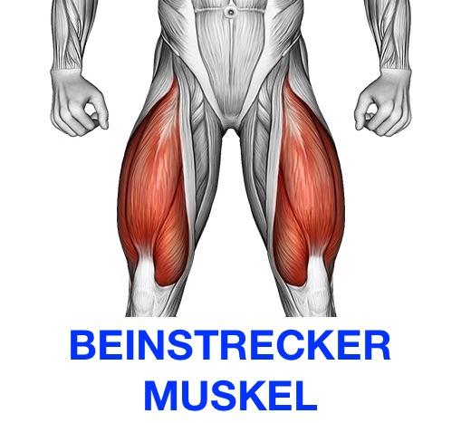 Grafik von dem Beinstrecker Muskel Quadrizeps.