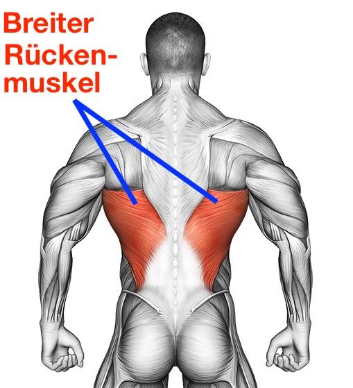 Breiter Rückenmuskel: Foto von dem Latissimus musculus dorsi.