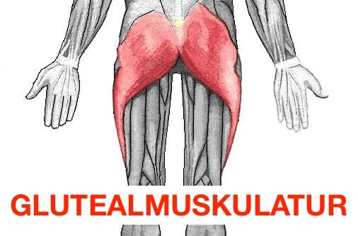 Grafik von der Glutealmuskulatur, dem großen Gesäßmuskel.