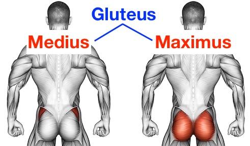 Grafik von den Gesäßmuskeln gluteus maximus und gluteus medius.