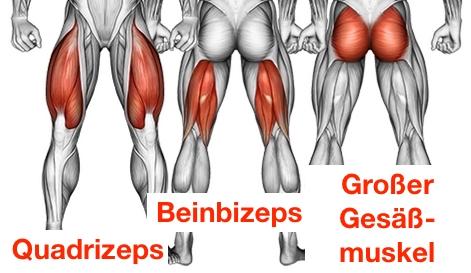 Grafik von den Muskeln Quadrizeps, Beinbizeps und grosser Gesäßmuskel bei der Übung Kniebeugen.