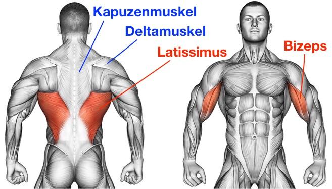 Foto von den belasteten Muskeln beim Rudern dem Latissimus, Kapuzenmuskel, hinterer Deltamuskel und Bizeps.