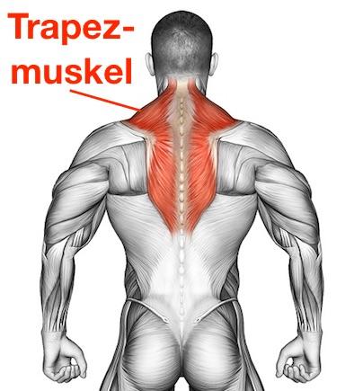 Trapezmuskel trainieren: Foto von dem Trapezmuskel beziehungsweise Kapuzenmuskel.