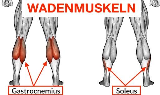Waden Übungen: Grafik von den Wadenmuskeln.