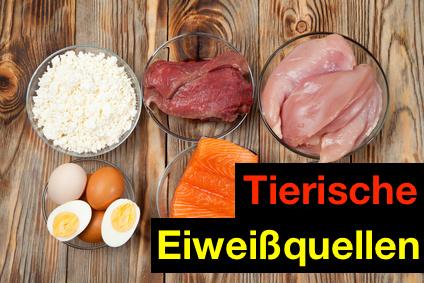 Die besten Eiweißquellen: Foto von Lebensmitteln aus tierischen Eiweißquellen.