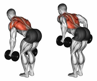 Trainingsplan für Anfänger: Foto von der Übung Kurzhantelrudern für den oberen Rücken.