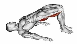 Beinmuskeltraining: Foto von der Übung Beckenheben ohne Gewicht (Endposition).