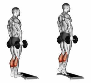 Beinmuskeltraining: Foto von der Übung stehendes Wadenheben mit Kurzhanteln.
