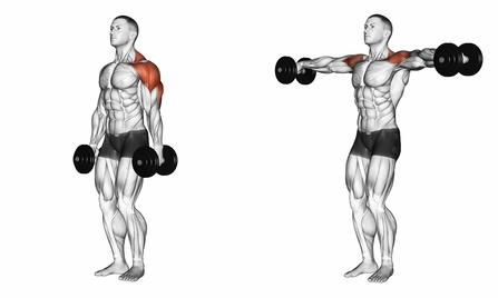 Schulterübungen ohne Geräte: Foto von der Übung Kurzhantel Seitheben stehend.
