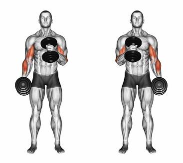 Unterarme trainieren: Foto von der Übung beidarmige Hammercurls abwechselnd.
