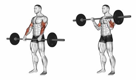 Unterarme trainieren: Foto von der Übung Bizepscurls mit Langhantel Obergriff.