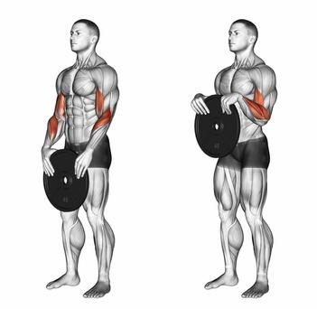 Unterarme trainieren: Foto von der Übung Reverse Curls mit Hantelscheibe Obergriff.