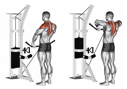 Foto von der Übung aufrechtes Rudern am Kabelzug zum Nackenmuskulatur trainieren.