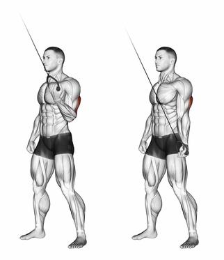 Kabelzug Übungen: Foto von der Trizeps Übung einarmiges Trizepsdrücken am Kabelzug.