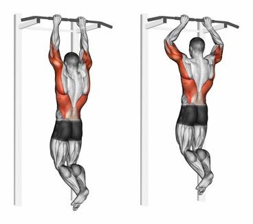 Foto von der Übung enge Klimmzüge Obergriff als eine der Klimmzugstange Übungen.