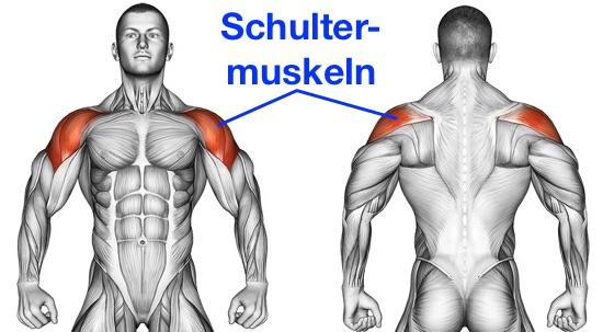Foto von den Schultermuskeln, auch Deltamuskel genannt.