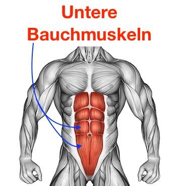 Foto untere Bauchmuskeln.
