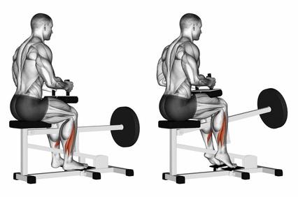 Wadenmuskulatur aufbauen: Foto von der Übung sitzendes Wadenheben am Gerät.