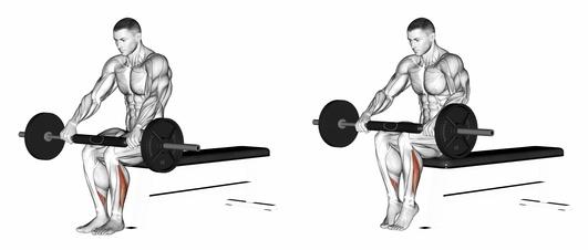 Wadenmuskulatur aufbauen: Foto von der Übung sitzendes Wadenheben mit Langhantel.
