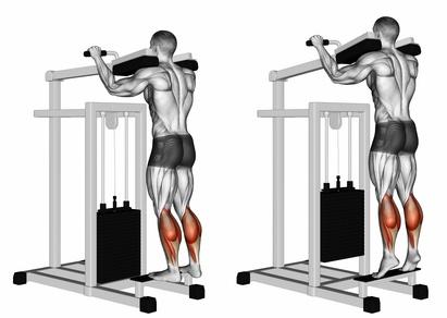 Wadenmuskulatur trainieren: Foto von der Übung stehendes Wadenheben am Gerät.