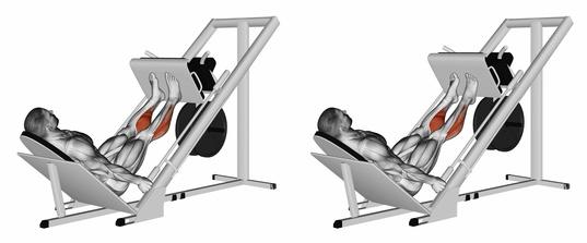 Wadenmuskulatur trainieren: Foto von der Übung sitzendes Wadenheben an der Beinpresse.