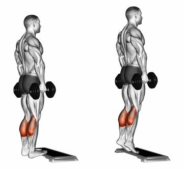 Wadenmuskulatur trainieren: Foto von der Übung stehendes Wadenheben mit Kurzhanteln.