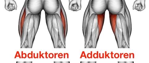 Foto von den Abduktoren und Adduktoren der Oberschenkelmuskulatur.