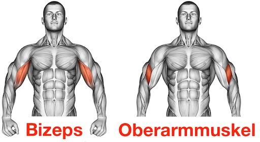 Foto von den Muskeln Bizeps und Oberarmmuskel als Scottcurl Muskelgruppen.