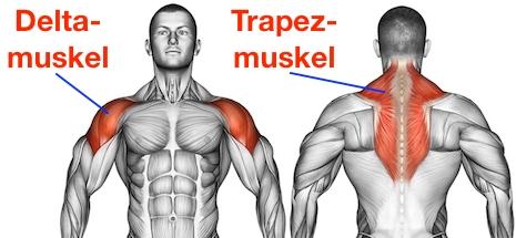 Foto von dem Deltamuskel und dem Trapezmuskel als Seitheben Muskelgruppen.