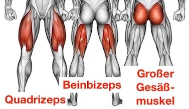 Foto von den einbeinige Kniebeuge Muskelgruppen Quadrizeps, Beinbizeps und grosser Gesäßmuskel.