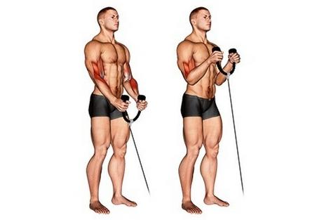 Seilzug Fitness Übungen: Foto von der Übung Hammercurls am Seilzug.