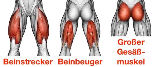 Foto von den Kniebeugen Muskelgruppen: Beinstrecker, Beinbeuger und großer Gesäßmuskel.