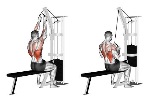 Seilzug Fitness Übungen: Foto von der Übung Latziehen sitzend am Seilzug.