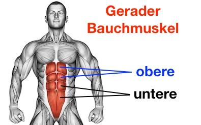 Foto von den oberen und unteren Bauchmuskeln am geraden Bauchmuskel.