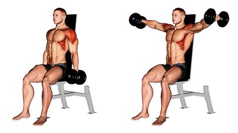Foto von der Übung Seitheben mit Kurzhanteln sitzend.