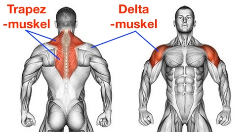 Foto vom Trapezmuskel und Deltamuskel als Muskeln bei der Übung aufrechtes Rudern.