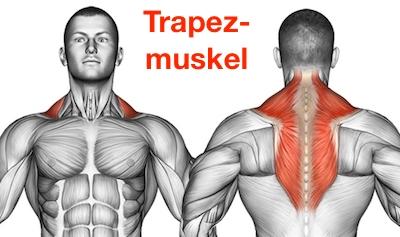 Foto von dem Trapezmuskel Musculus trapezius als Nackenziehen Muskel.
