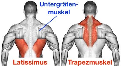 Vorgebeugtes Rudern Muskelgruppen: Foto von den Muskeln Latissimus Trapezmuskel und Untergrätenmuskel.
