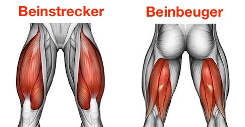 Foto vom Beinstrecker und Beinbeuger zum Beinmuskulatur aufbauen.