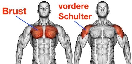 Foto von den Muskelgruppen Brust und vordere Schulter bei der Übung Fliegende.