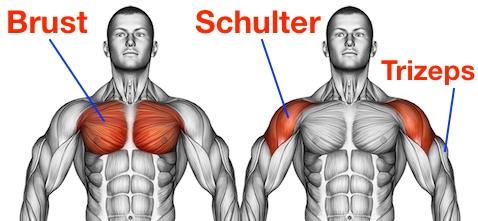 Foto von Brust, Schulter und Trizeps als Kurzhanteldrücken Muskeln.