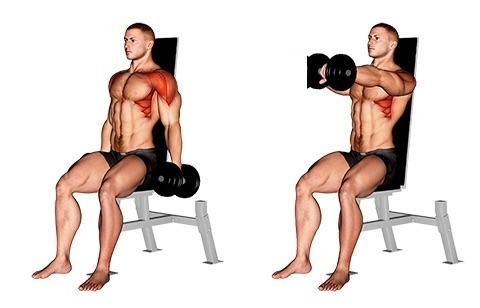 Foto von der Übung einarmiges Kurzhantel Frontheben sitzend.