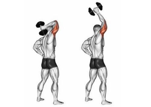 Trizeps Übungen Kurzhantel: Foto von der Übung einarmiges Kurzhantel Trizepsdrücken stehend.