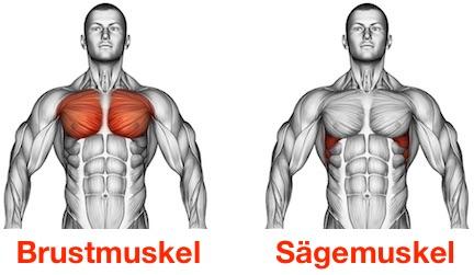 Foto von den Brustmuskeln großer Brustmuskel und vorderer Sägemuskel.